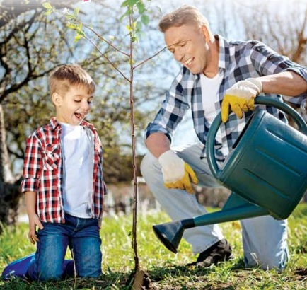 Расти, яблонька! Выбираем саженцы плодовых культур